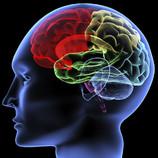 Nervensystem, Adduco, Stressabbau